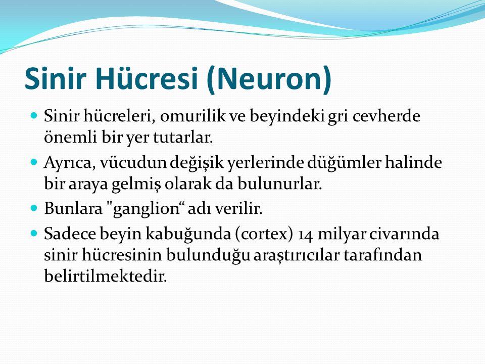 Sinir Hücresi (Neuron) Sinir hücreleri, omurilik ve beyindeki gri cevherde önemli bir yer tutarlar. Ayrıca, vücudun değişik yerlerinde düğümler halind