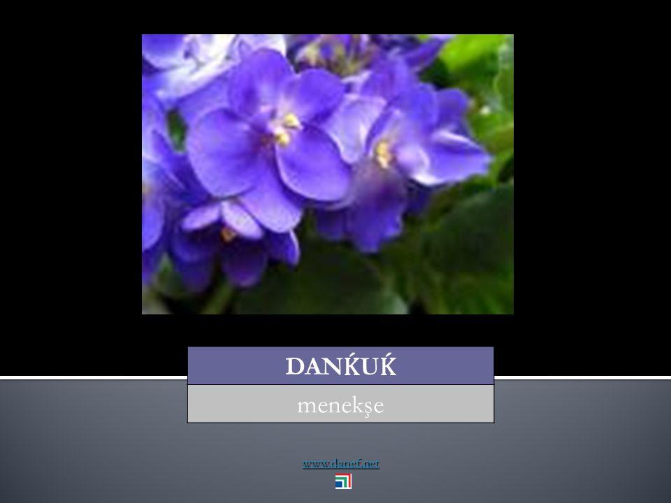www.danef.net ĆESIJ kendiliğinden yetişen,... self sown plant