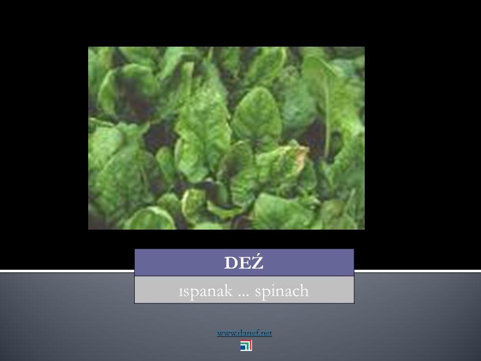 www.danef.net DAN Ḱ U Ḱ menekşe