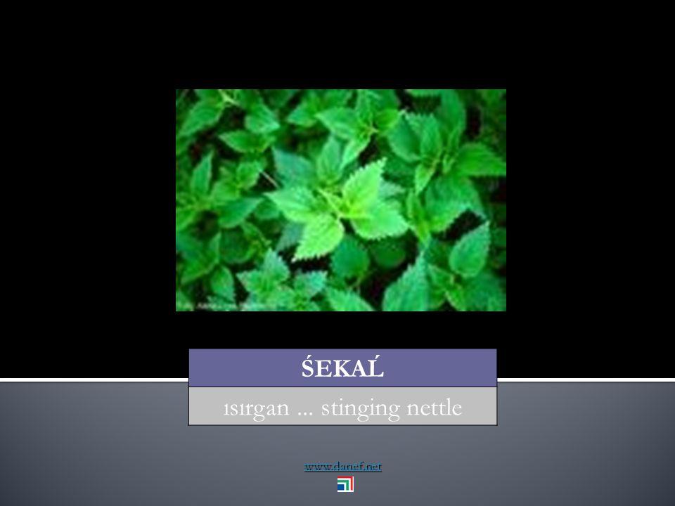 www.danef.net THAPE yaprak... leaf