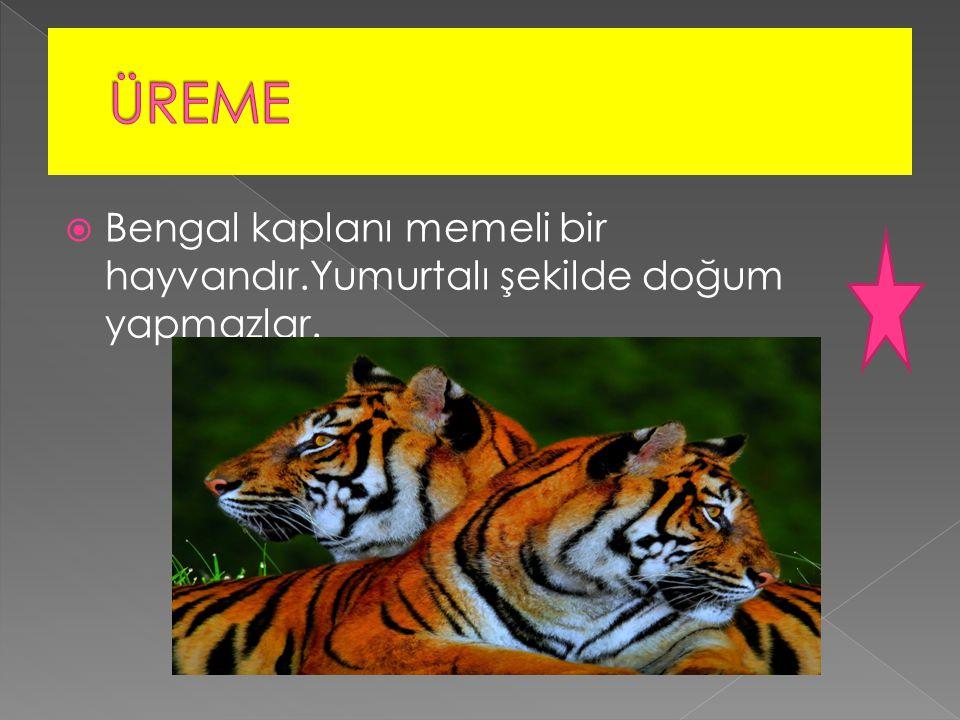  Bengal kaplanı memeli bir hayvandır.Yumurtalı şekilde doğum yapmazlar.