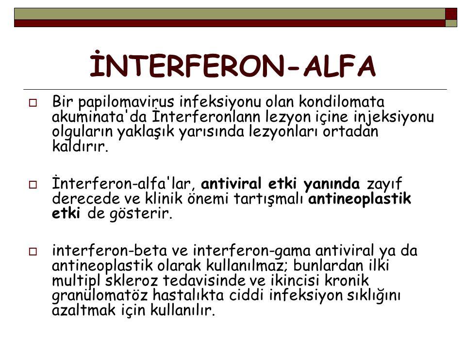İNTERFERON-ALFA  Bir papilomavirus infeksiyonu olan kondilomata akuminata da İnterferonlann lezyon içine injeksiyonu olguların yaklaşık yarısında lezyonları ortadan kaldırır.