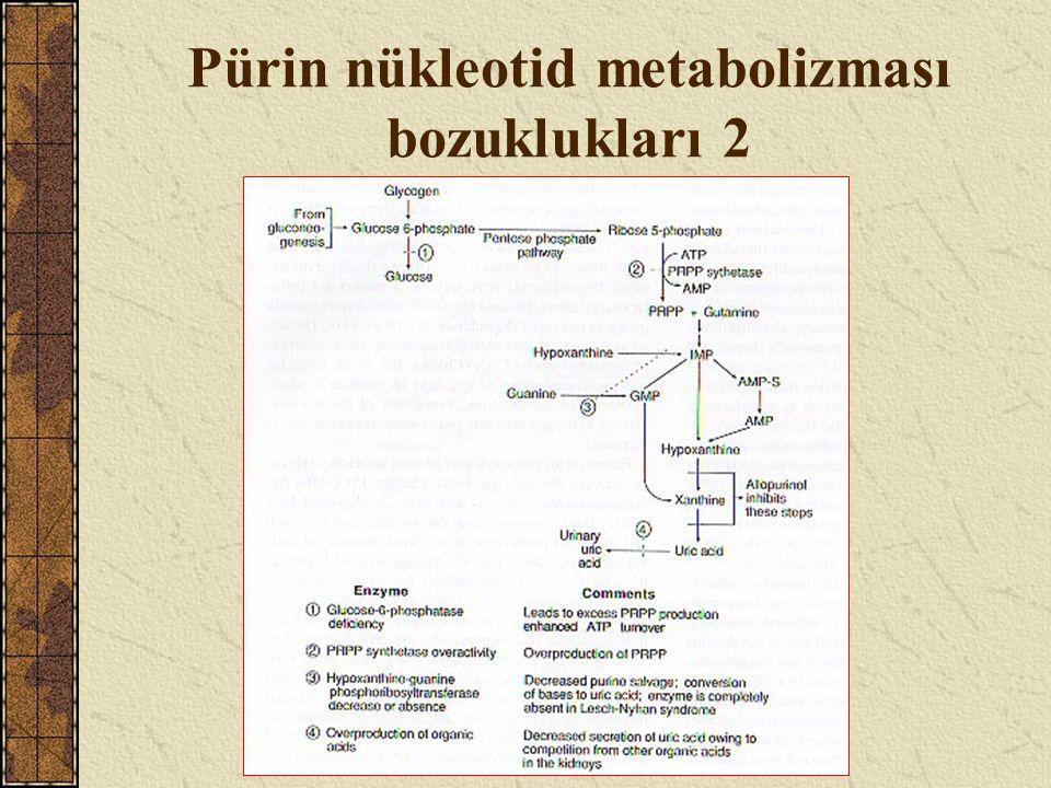 Pürin nükleotid metabolizması bozuklukları 2