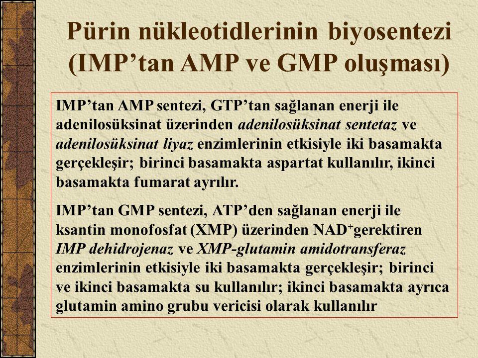 Pürin nükleotidlerinin biyosentezi (IMP'tan AMP ve GMP oluşması) IMP'tan AMP sentezi, GTP'tan sağlanan enerji ile adenilosüksinat üzerinden adenilosük