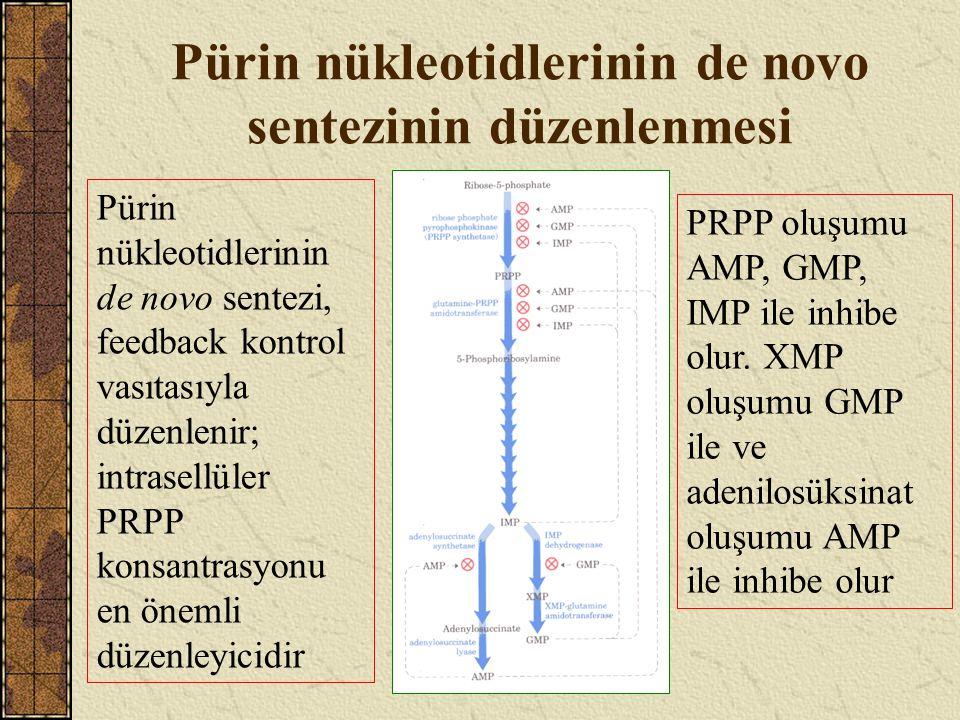 Pürin nükleotidlerinin kurtarılma yolları 1 Serbest pürin bazları adenin, hipoksantin ve guaninden pürin nükleotidleri olan AMP, IMP ve GMP oluşumu için PRPP gereklidir; AMP oluşumu adenin-fosforibozil transferaz etkisiyle katalizlenir; IMP ve GMP oluşumu hipoksantin-guanin fosforibozil transferaz etkisiyle katalizlenir