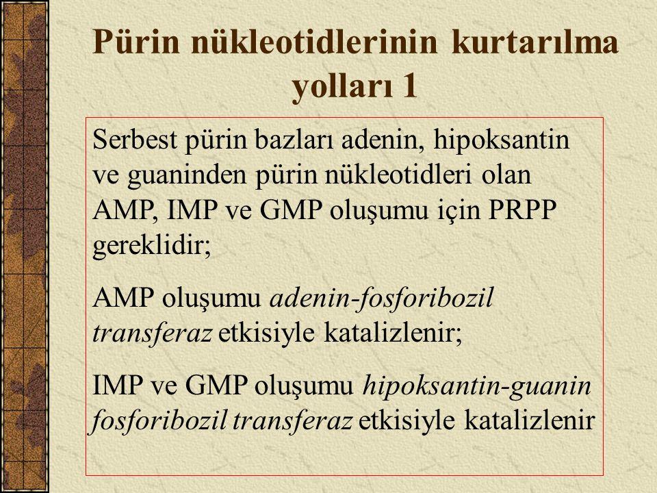 Pürin nükleotidlerinin kurtarılma yolları 1 Serbest pürin bazları adenin, hipoksantin ve guaninden pürin nükleotidleri olan AMP, IMP ve GMP oluşumu iç