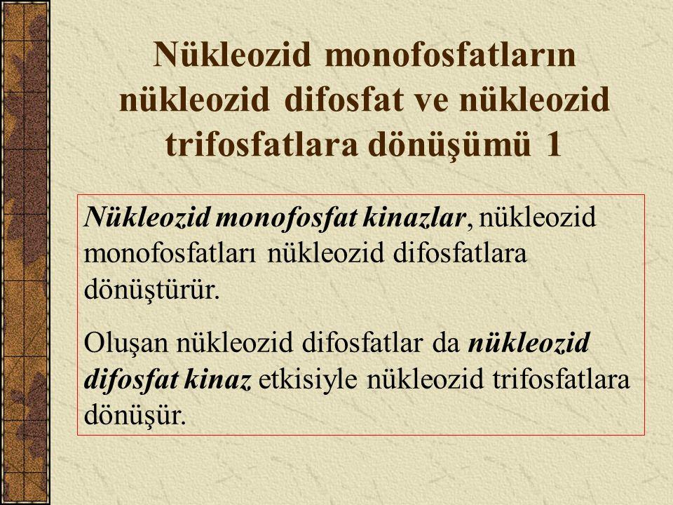 Nükleozid monofosfatların nükleozid difosfat ve nükleozid trifosfatlara dönüşümü 2 Nükleozid monofosfat kinazlar, baza özgünlük gösterirler, fosfat kaynağı olarak ATP kullanırlar ve bazlarına göre isimlendirilirler.