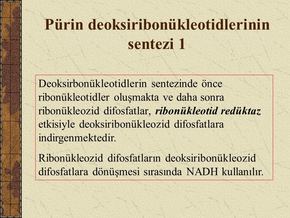 Pürin nükleotid metabolizması bozuklukları 4