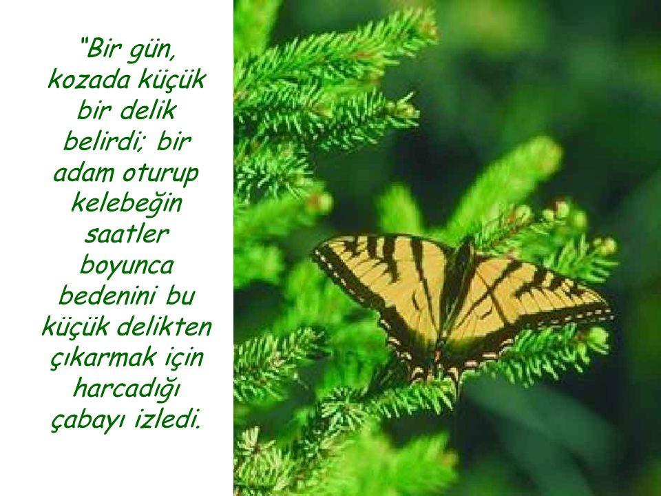 33 Bir Kelebeğin Dersi