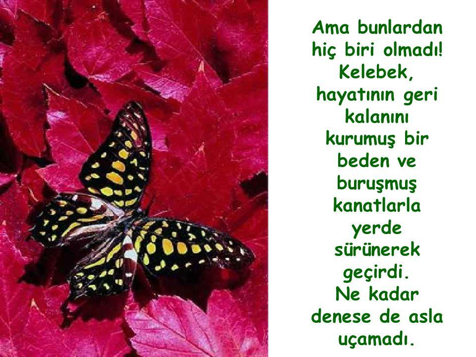 37 Adam izlemeye devam etti; çünkü her an kelebeğin kanatlarının açılıp genişleyeceğini ve bedenini taşıyacak kadar güçleneceğini umuyordu.
