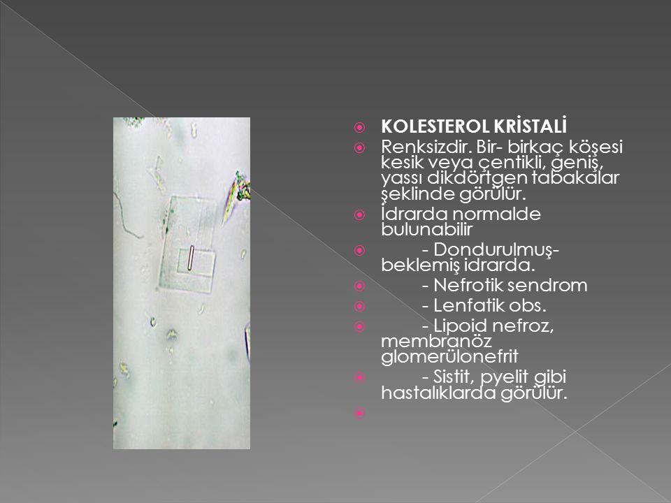  KOLESTEROL KRİSTALİ  Renksizdir. Bir- birkaç köşesi kesik veya çentikli, geniş, yassı dikdörtgen tabakalar şeklinde görülür.  İdrarda normalde bul