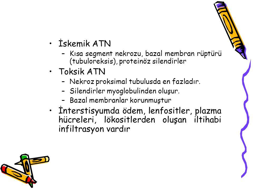 İskemik ATN –Kısa segment nekrozu, bazal membran rüptürü (tubuloreksis), proteinöz silendirler Toksik ATN –Nekroz proksimal tubulusda en fazladır. –Si