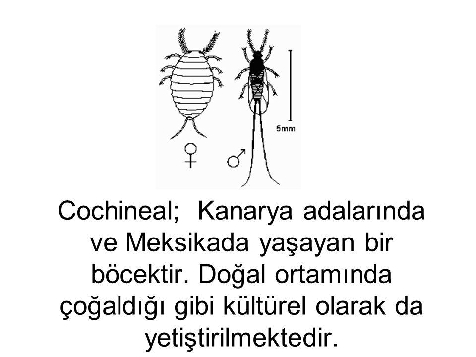 Cochineal; Kanarya adalarında ve Meksikada yaşayan bir böcektir. Doğal ortamında çoğaldığı gibi kültürel olarak da yetiştirilmektedir.