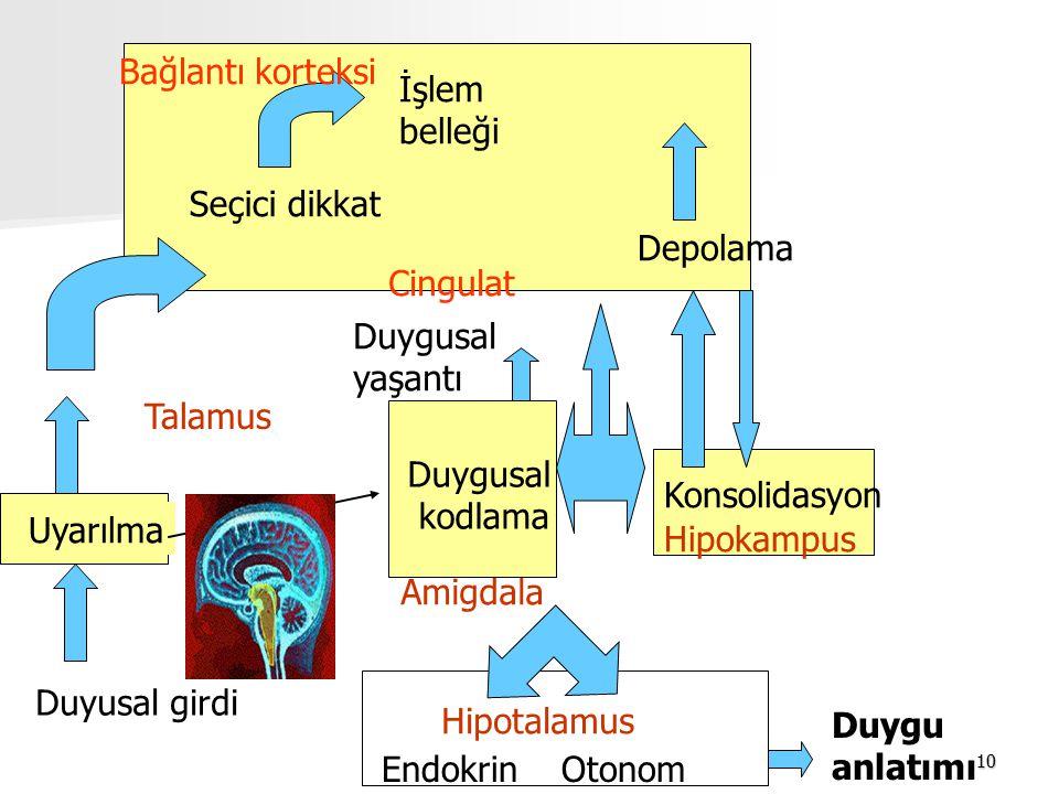 10 Duyusal girdi Uyarılma Seçici dikkat İşlem belleği Bağlantı korteksi Depolama Duygusal kodlama Cingulat Duygusal yaşantı Amigdala Duygu anlatımı En