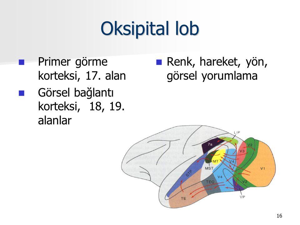 Oksipital lob Primer görme korteksi, 17. alan Görsel bağlantı korteksi, 18, 19. alanlar Renk, hareket, yön, görsel yorumlama 16