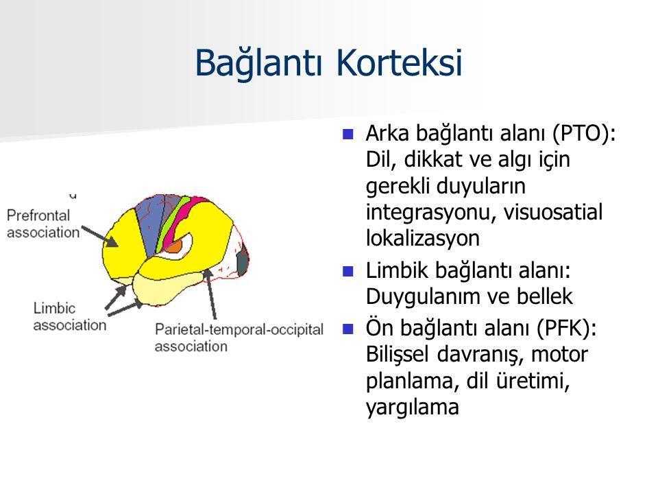 Bağlantı Korteksi Arka bağlantı alanı (PTO): Dil, dikkat ve algı için gerekli duyuların integrasyonu, visuosatial lokalizasyon Limbik bağlantı alanı: