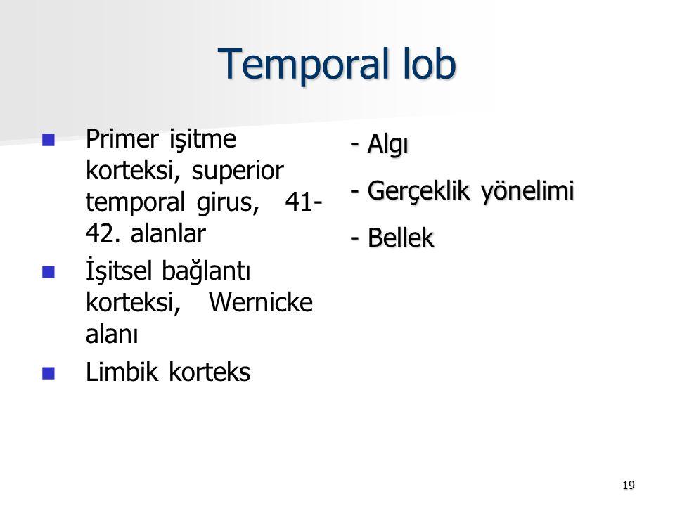 Temporal lob Primer işitme korteksi, superior temporal girus, 41- 42. alanlar İşitsel bağlantı korteksi, Wernicke alanı Limbik korteks - Algı - Gerçek