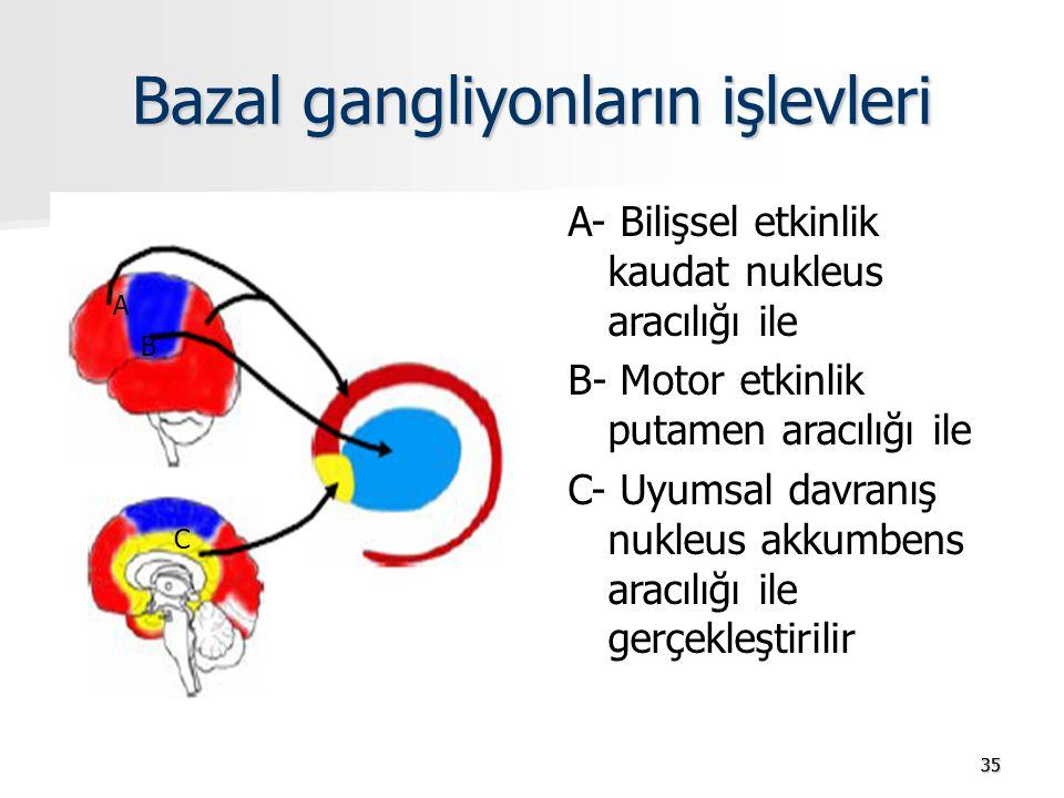 3535 Bazal gangliyonların işlevleri A- Bilişsel etkinlik kaudat nukleus aracılığı ile B- Motor etkinlik putamen aracılığı ile C- Uyumsal davranış nukleus akkumbens aracılığı ile gerçekleştirilir A B C
