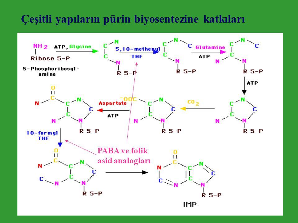 Çeşitli yapıların pürin biyosentezine katkıları PABA ve folik asid analogları