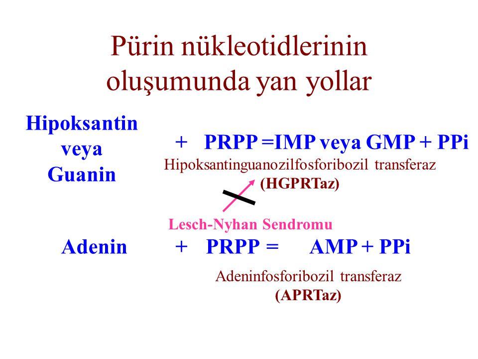 Pürin nükleotidlerinin oluşumunda yan yollar Hipoksantin veya Guanin +PRPP=IMP veya GMP + PPi Hipoksantinguanozilfosforibozil transferaz (HGPRTaz) Ade