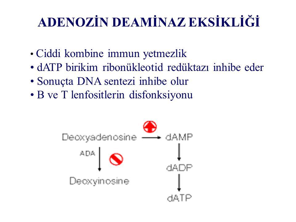 ADENOZİN DEAMİNAZ EKSİKLİĞİ Ciddi kombine immun yetmezlik dATP birikim ribonükleotid redüktazı inhibe eder Sonuçta DNA sentezi inhibe olur B ve T lenf
