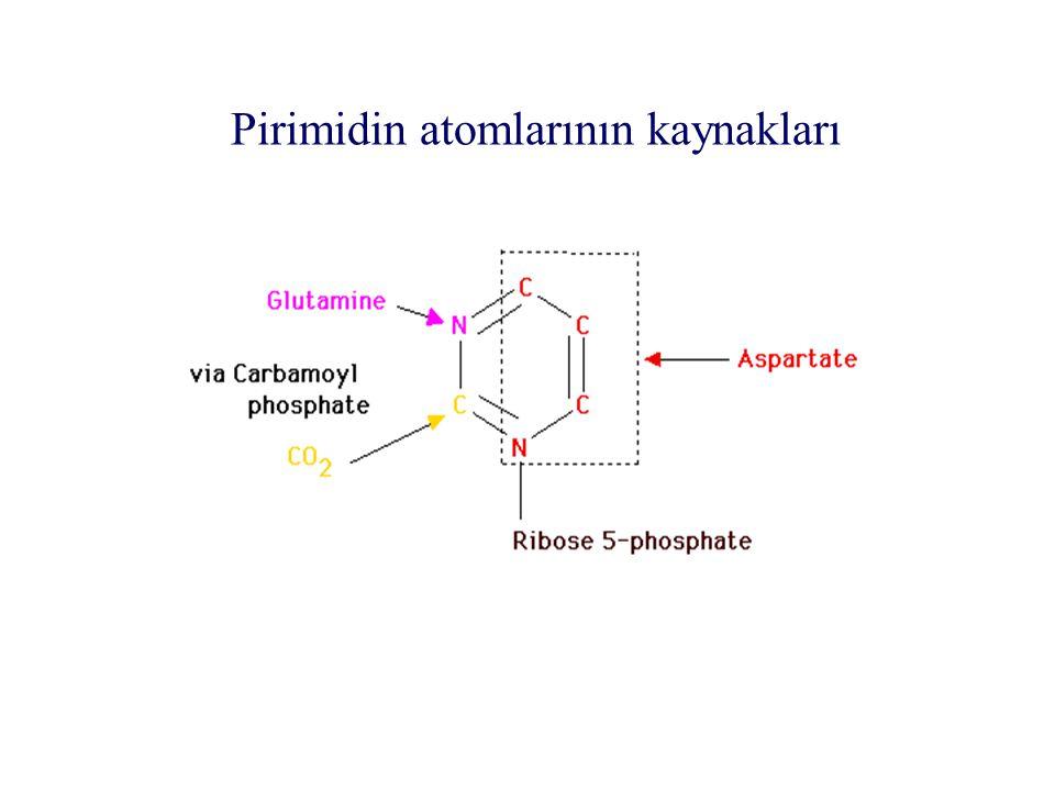 Pirimidin atomlarının kaynakları aergıaergıjrglarglırglı jrg