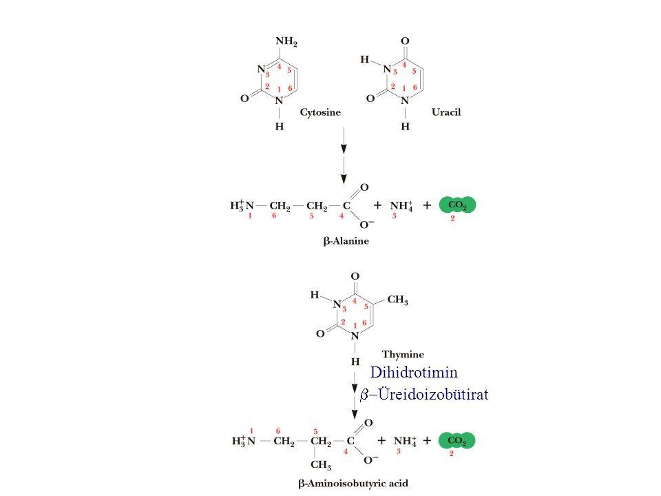 Dihidrotimin  Üreidoizobütirat
