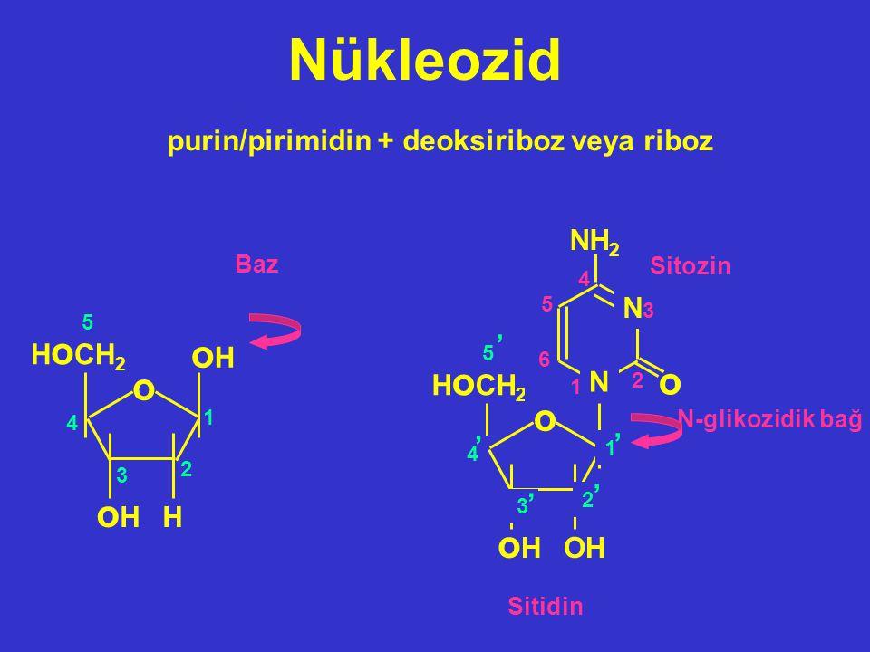 Nükleozid H oHoH oHoH H o CH 2 o 1 2 3 4 5 Baz purin/pirimidin + deoksiriboz veya riboz OHOH oHoH H o CH 2 o 1 2 3 4 5 N o N NH 2 Sitozin 1 3 2 4 5 6