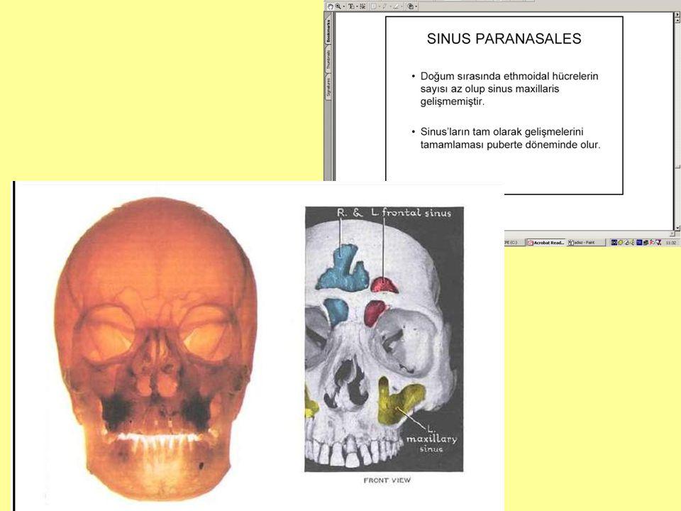 Paranasal sinusların görevleri nelerdir ?