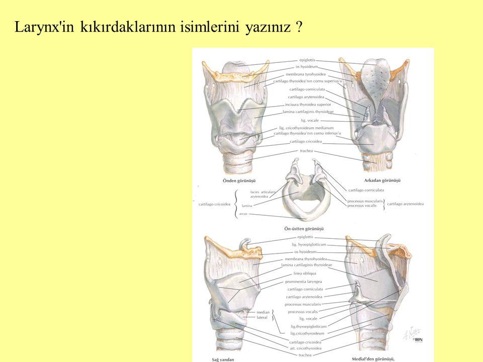 Larynx'in kıkırdaklarının isimlerini yazınız ?
