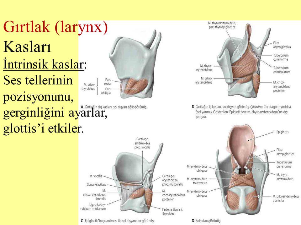 Gırtlak (larynx) Kasları İntrinsik kaslar: Ses tellerinin pozisyonunu, gerginliğini ayarlar, glottis'i etkiler.