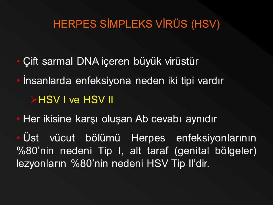 Çift sarmal DNA içeren büyük virüstür İnsanlarda enfeksiyona neden iki tipi vardır  HSV I ve HSV II Her ikisine karşı oluşan Ab cevabı aynıdır Üst vü