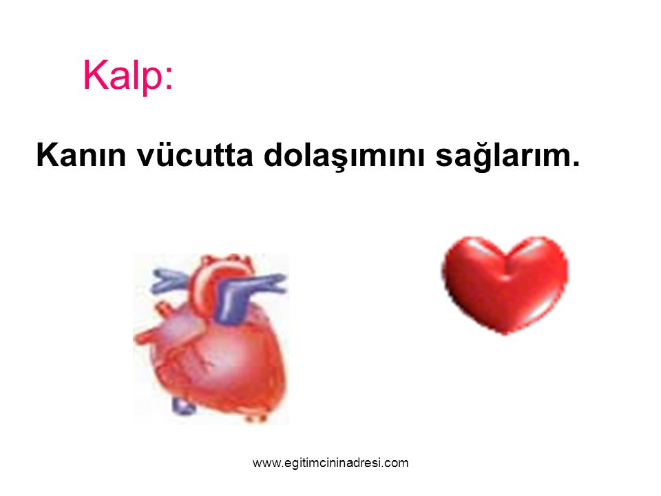Kanın vücutta dolaşımını sağlarım. Kalp: www.egitimcininadresi.com