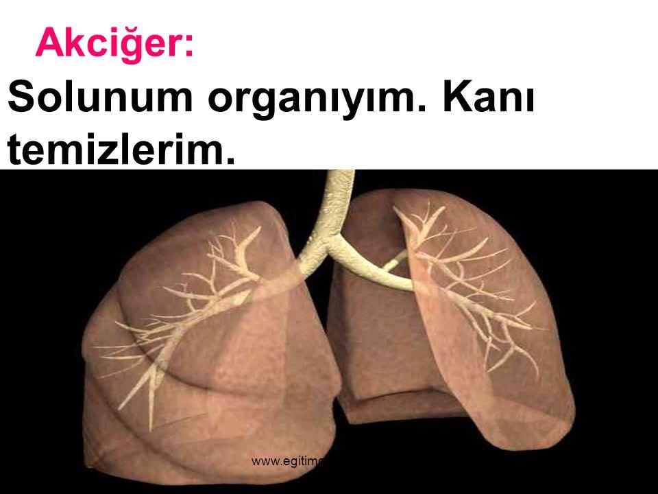 Akciğer: Solunum organıyım. Kanı temizlerim. www.egitimcininadresi.com
