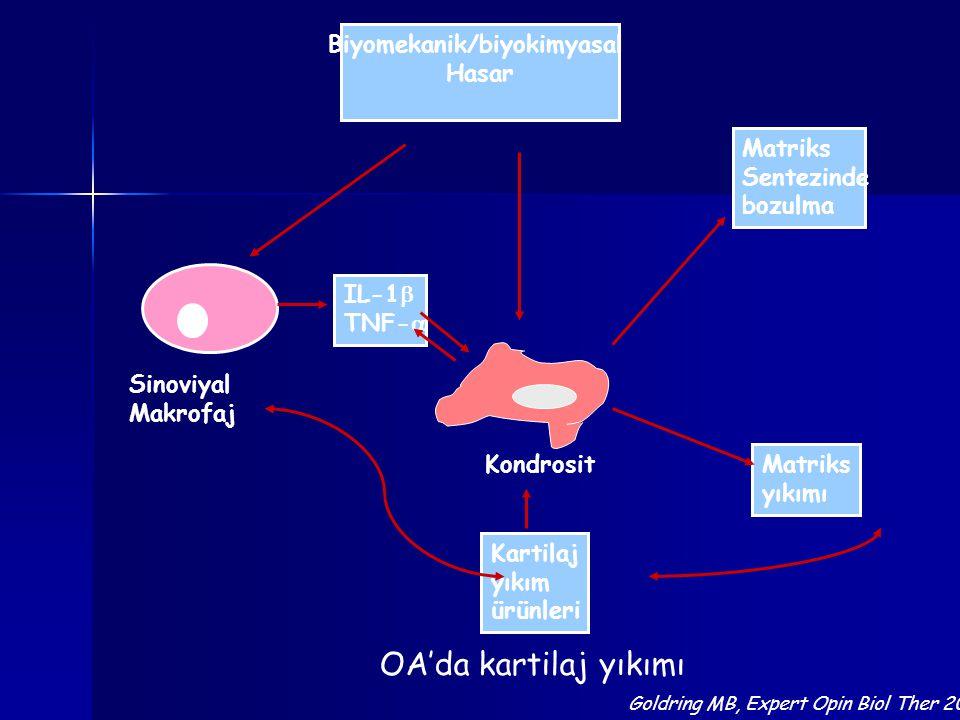 Biyomekanik/biyokimyasal Hasar Sinoviyal Makrofaj Kondrosit Matriks Sentezinde bozulma Matriks yıkımı Kartilaj yıkım ürünleri IL-1  TNF-  OA'da kart