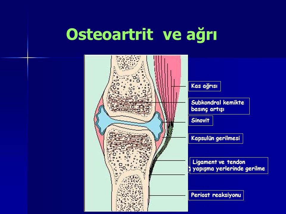 Kas ağrısı Subkondral kemikte basınç artışı Sinovit Kapsulün gerilmesi Ligament ve tendon yapışma yerlerinde gerilme Periost reaksiyonu Osteoartrit ve