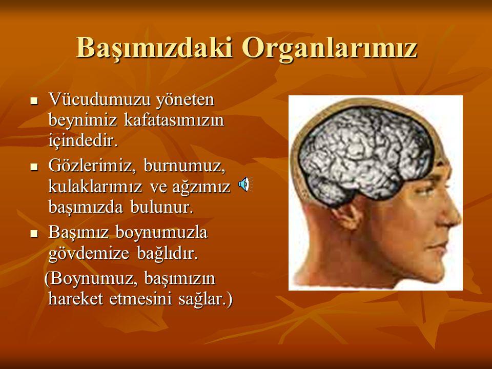 Vücudumuz üç (3) bölümden oluşur.Vücudumuz üç (3) bölümden oluşur.