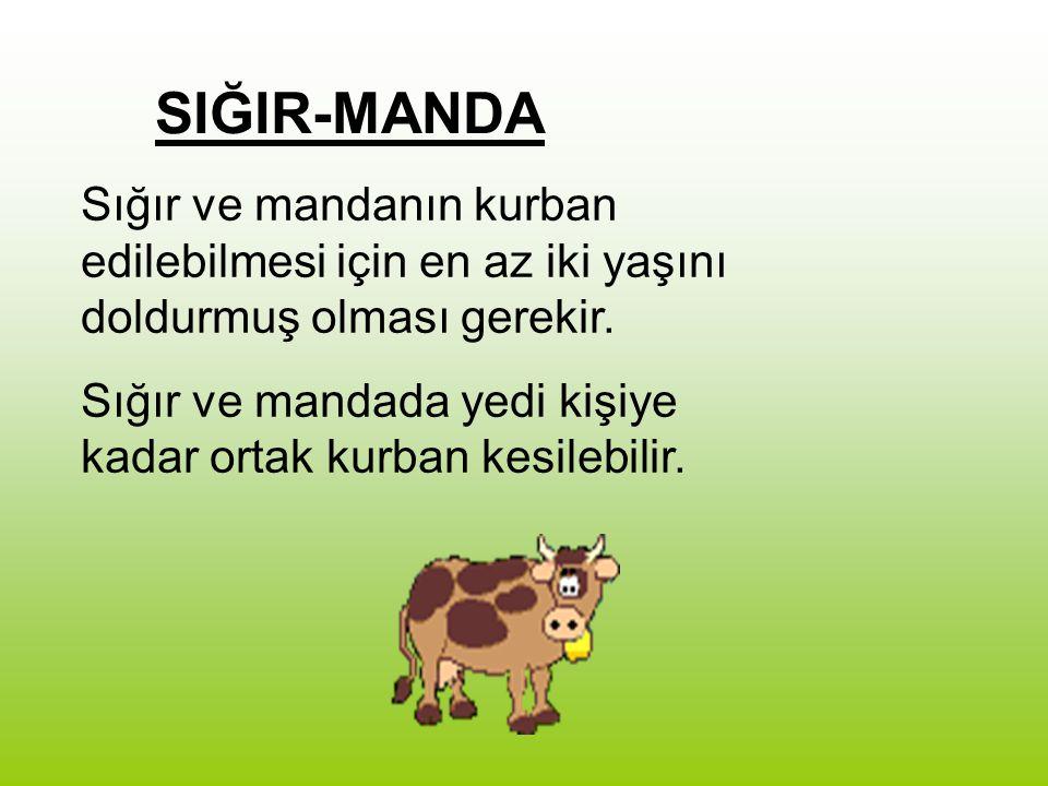 SIĞIR-MANDA Sığır ve mandanın kurban edilebilmesi için en az iki yaşını doldurmuş olması gerekir. Sığır ve mandada yedi kişiye kadar ortak kurban kesi