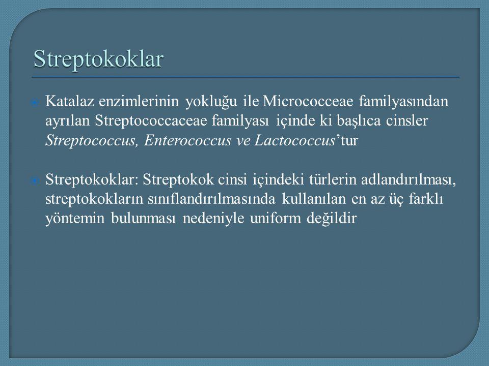  Katalaz enzimlerinin yokluğu ile Micrococceae familyasından ayrılan Streptococcaceae familyası içinde ki başlıca cinsler Streptococcus, Enterococcus
