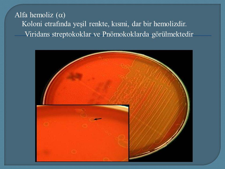 Alfa hemoliz (  ) Koloni etrafında yeşil renkte, kısmi, dar bir hemolizdir. Viridans streptokoklar ve Pnömokoklarda görülmektedir