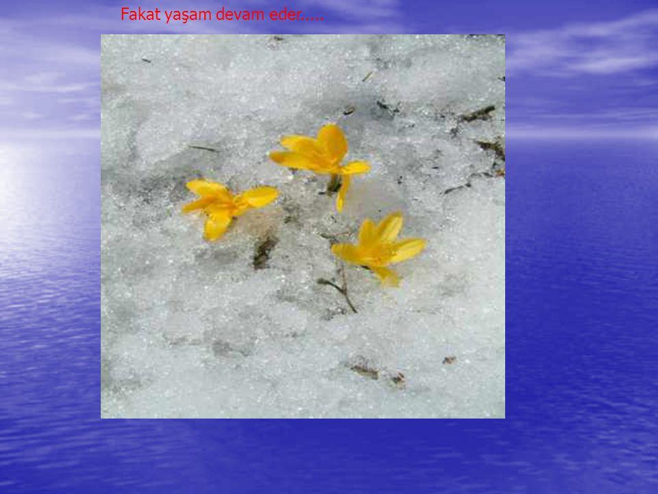 Kış aylarında büyük bir bölümü donan gölün üzeri kar ile kaplanır