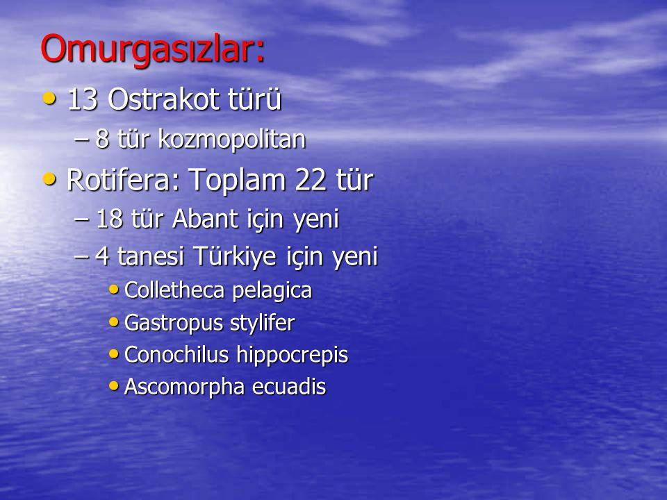 Ceratinium hirundinella :::: Asterionella formosa