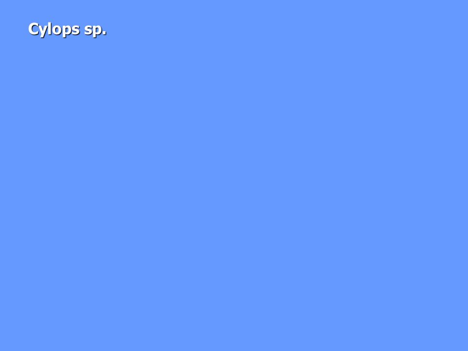 Omurgasızlar: 13 Ostrakot türü 13 Ostrakot türü –8 tür kozmopolitan Rotifera: Toplam 22 tür Rotifera: Toplam 22 tür –18 tür Abant için yeni –4 tanesi Türkiye için yeni Colletheca pelagica Colletheca pelagica Gastropus stylifer Gastropus stylifer Conochilus hippocrepis Conochilus hippocrepis Ascomorpha ecuadis Ascomorpha ecuadis