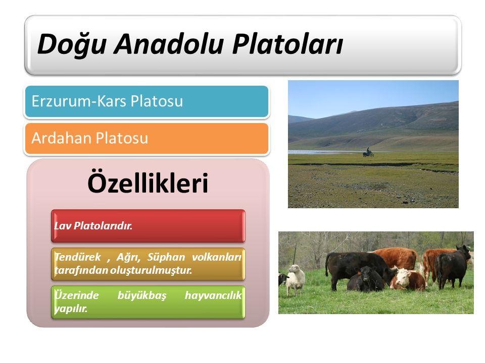 Doğu Anadolu Platoları Erzurum-Kars PlatosuArdahan Platosu Özellikleri Lav Platolarıdır. Tendürek, Ağrı, Süphan volkanları tarafından oluşturulmuştur.