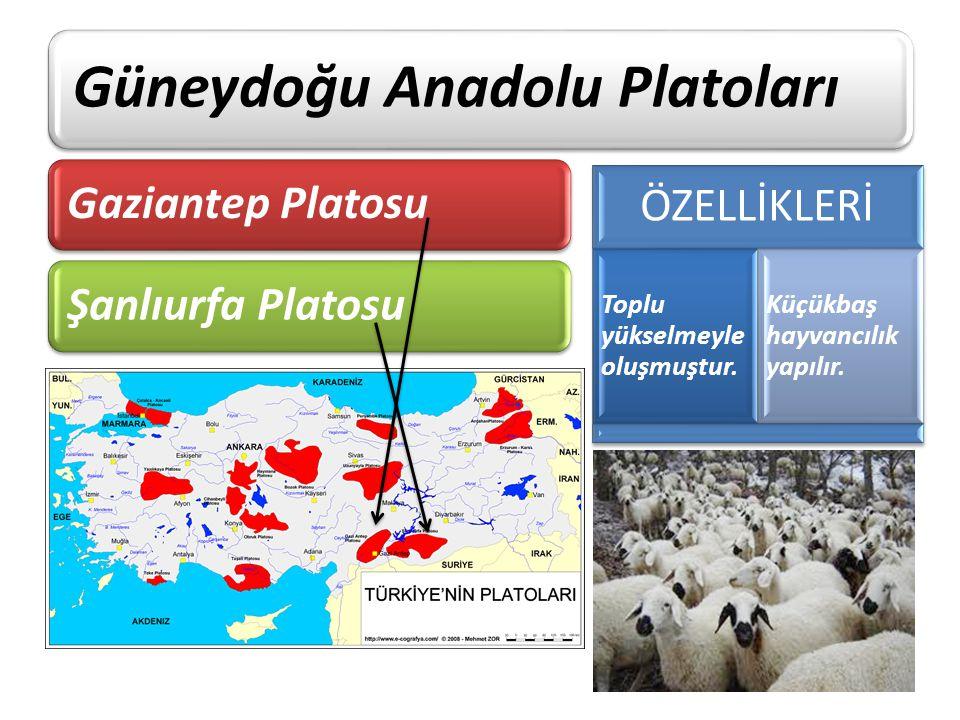 Güneydoğu Anadolu Platoları Gaziantep PlatosuŞanlıurfa Platosu ÖZELLİKLERİ Toplu yükselmeyle oluşmuştur. Küçükbaş hayvancılık yapılır.