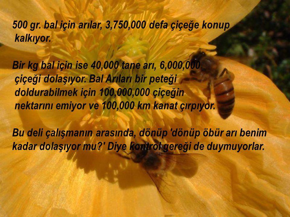 500 gr. bal için arılar, 3,750,000 defa çiçeğe konup kalkıyor. Bir kg bal için ise 40,000 tane arı, 6,000,000 çiçeği dolaşıyor. Bal Arıları bir peteği