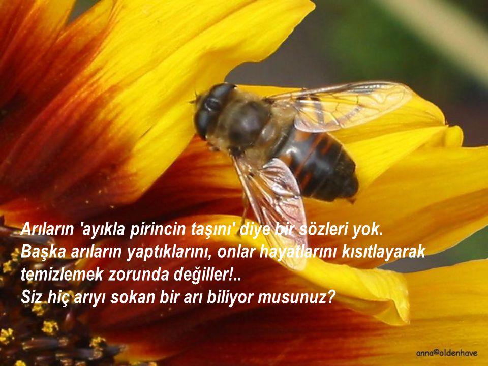 Arıların 'ayıkla pirincin taşını' diye bir sözleri yok. Başka arıların yaptıklarını, onlar hayatlarını kısıtlayarak temizlemek zorunda değiller!.. Siz