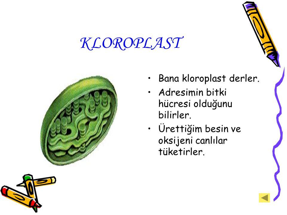 KLOROPLAST Bana kloroplast derler. Adresimin bitki hücresi olduğunu bilirler. Ürettiğim besin ve oksijeni canlılar tüketirler.