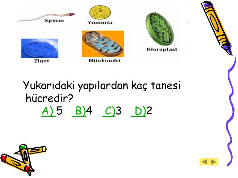 Yukarıdaki yapılardan kaç tanesi hücredir? A) 5 B)4 C)3 D)2A) B) C) D)