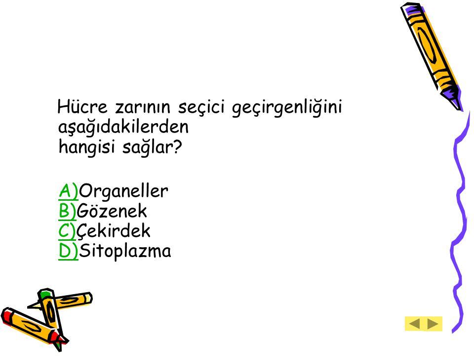 Hücre zarının seçici geçirgenliğini aşağıdakilerden hangisi sağlar? A)Organeller B)Gözenek C)Çekirdek D)Sitoplazma A) B) C) D)